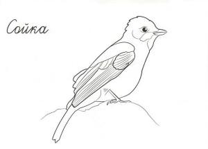Сибирские птицы картинки