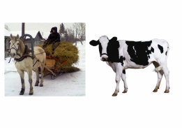 "Развивающее занятие ""Ферма"""
