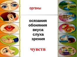 Карточки Органы чувств