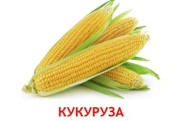Карточки Овощи для детей